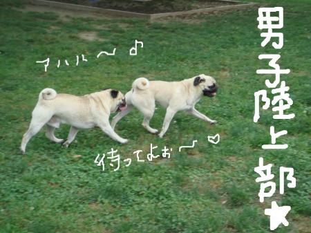 snap_omame89_20097221527.jpg