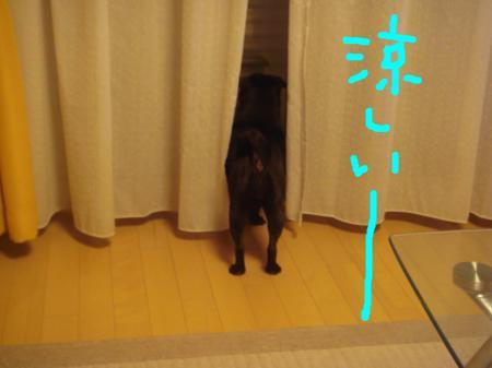 snap_omame89_200973222957.jpg