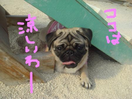 snap_omame89_200981201057.jpg