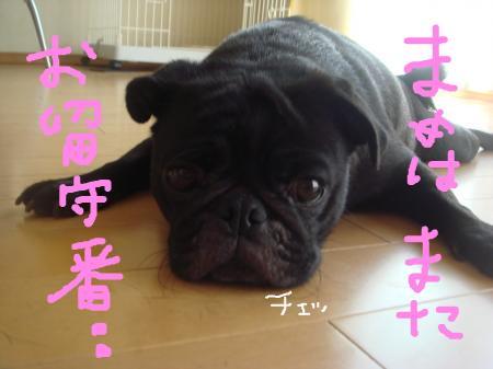 snap_omame89_200992223352.jpg