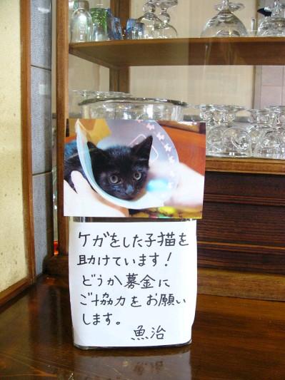 黒猫募金1