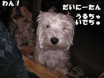 2008.12.19-5