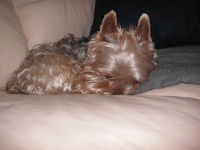 2008.12.19-8