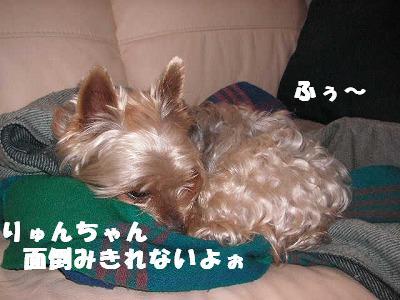 2009.01.14-4