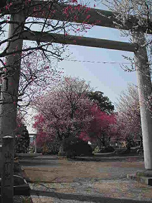 2009.03.05-15
