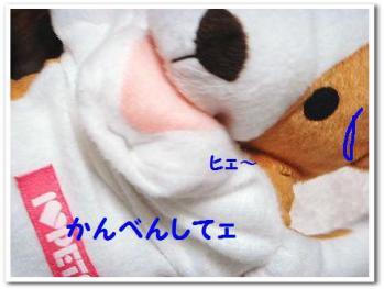 DSC00484.jpg