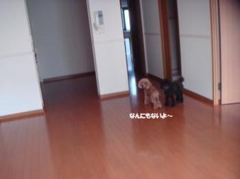 DSC09493_convert_20100930223727.jpg