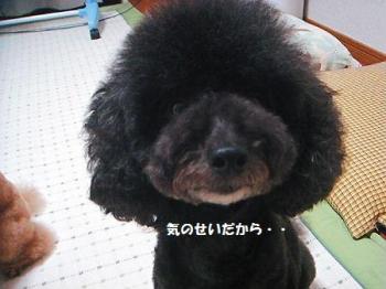 DSC09667_20100720115554.jpg