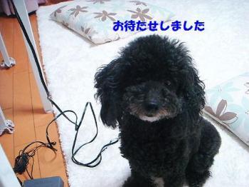 DSC09706_20101026185126.jpg