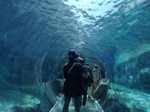 ペンギン館の中を通る!…も、ちょうど「もぐもぐタイム」で泳いでる写真は撮れなかった…動画は撮りましたが(笑)。