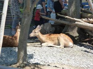 鹿は口蹄疫の影響で一部観察する場所が閉鎖されていて残念でした。