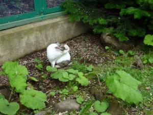 りす園があって、中にはウサギさんも居ました。^^