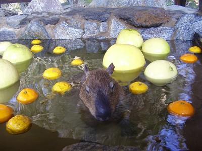 kapibara7.jpg