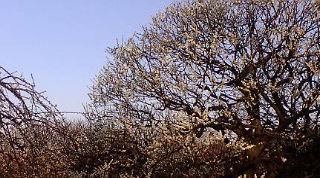 2009神代植物公園