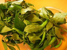 葉トウガラシ