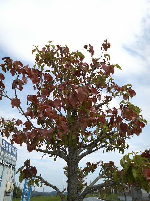 H20年9月14日 街路樹