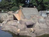 大浜公園のサル
