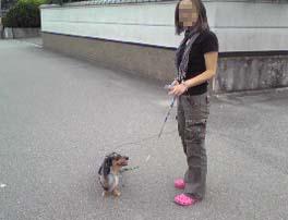 oz with yuki