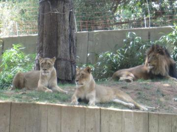 dczoo5