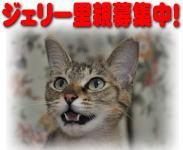 image7163_20090814180132.jpg