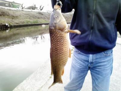 0215fish222.jpg