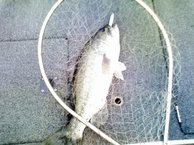 0712topfish.jpg