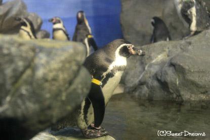 ペンギンさん^^