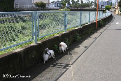 お散歩道~♪