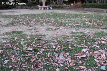 すっかり枯れた芝生・・・