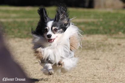 飛行犬∪・ω・∪