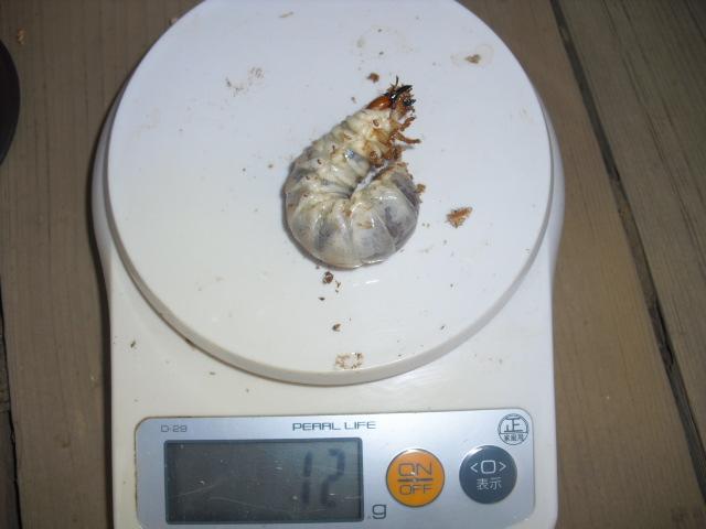 パラワン20100505