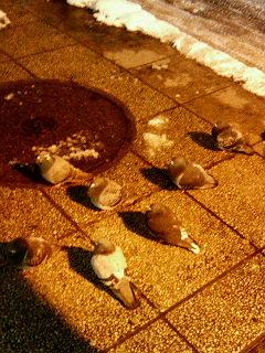 ハトの集団