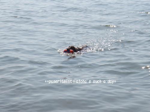 琵琶湖 アロ1