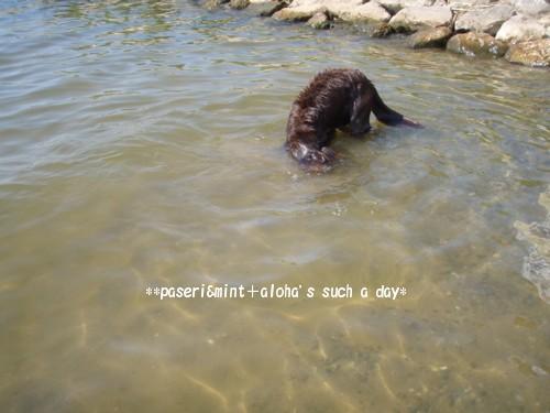 琵琶湖 アロ 潜り1