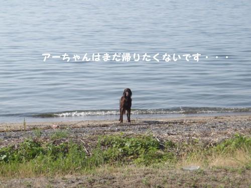 琵琶湖 アロ帰らないの
