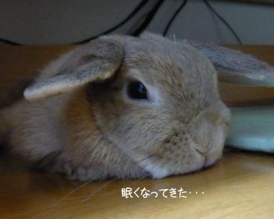 ぷーちゃんの定位置w