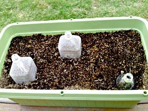 20100527 枝豆 種植え.JPG