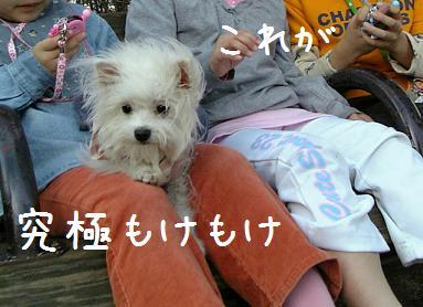 VFSH0108.jpg