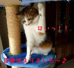 kari4.jpg