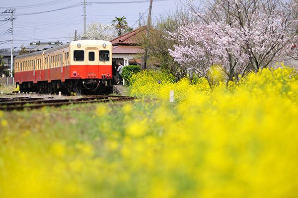 春色の小湊鉄道