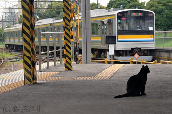 浅野駅のクロ猫さん