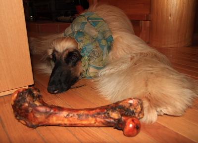 bone808