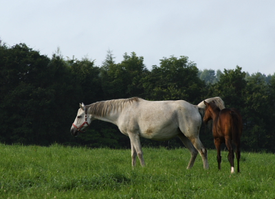 horse821