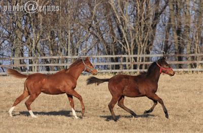 horse823