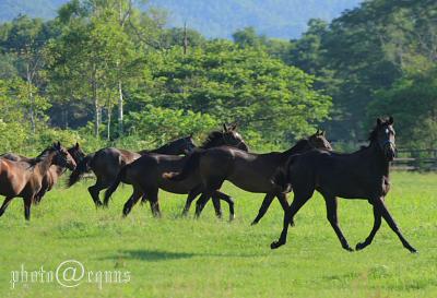 horse825