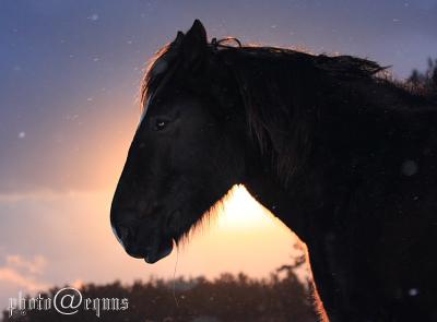 horse828
