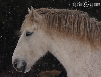 horse829