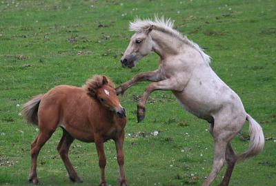 horse830