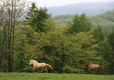 horse832