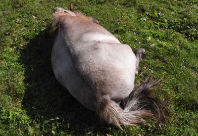 horse900